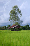 Shed house on the rice field clould background Royalty Free Stock Photos