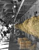 Shed Row at Horse Haven, Saratoga royalty free stock photos