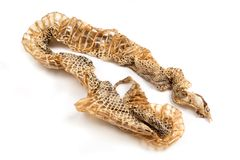 Shed snakeskin. Rattlesnake's shed snakeskin isolated on white Royalty Free Stock Photography