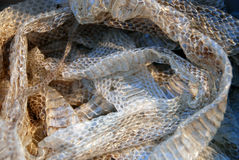 Shed snakeskin Royalty Free Stock Images