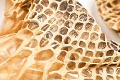 Shed snakeskin closeup Royalty Free Stock Image