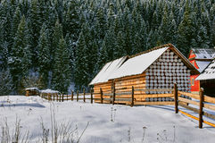 Shed and Snowy Pines Royalty Free Stock Photography