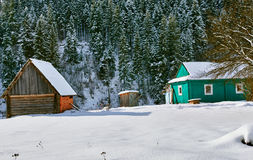 Shed and Snowy Pines Stock Image