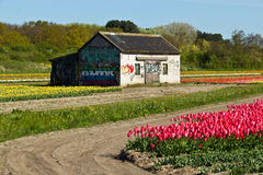 Shed on a tulip farm in rural Holland Stock Image