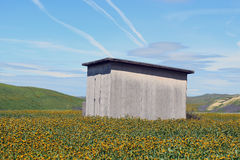 Shed in Wildflowers Stock Photo