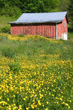 Shed & Yellow Flowers 2 Royalty Free Stock Photo