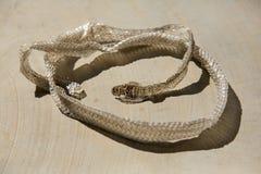 Shedded snake skin Royalty Free Stock Images