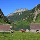 Sheds and horse at lake Fahlensee. Royalty Free Stock Image