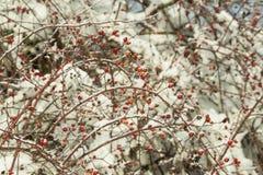 Sheeds предпосылки зимы льда снега холодные красные Стоковые Фото