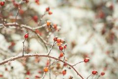 Sheeds rojos fríos del fondo del invierno del hielo de la nieve Fotos de archivo libres de regalías