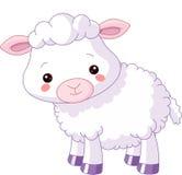 动物农场横向许多sheeeps夏天 羊羔 免版税库存图片
