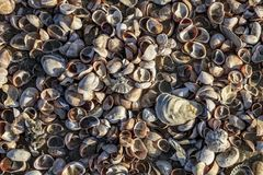 Sheels on the Beach. Bird eye view of a stack of seashells on a beach in Brittany in North of France Royalty Free Stock Photography