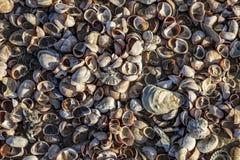 Sheels på stranden royaltyfri fotografi