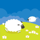 Sheep. Cute little lambs on fresh green meadow royalty free illustration