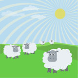 Sheep. Herd of sheep on a meadow Stock Images