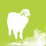 Sheep. Silhouette and grass- isolated objects over white background Royalty Free Stock Photos