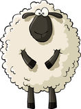 Sheep. On a white background, vector Stock Image