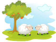 Sheep. Illustration of two sheep in a field Stock Photo