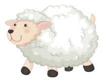 Free Sheep Stock Photo - 33072210