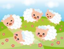 Free Sheep Stock Image - 5696951