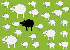 Sheep. Black sheep in the middle Royalty Free Stock Photography