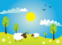 Sheep. Illustration of sheep in the meadow Stock Photo