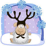 Sheep with antlers Stock Photo