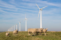 Free Sheep At A Dike Along A Row Of Wind Turbines Stock Images - 32772194