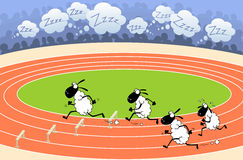 Sheep athletics Stock Images