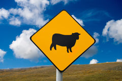 Sheep attention. Sign with sheep attention in Ireland Stock Images