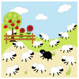Sheep background Royalty Free Stock Images