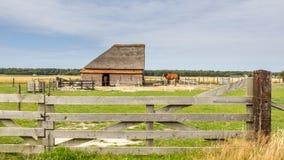 Sheep barn Stock Image