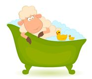 Sheep in bath Royalty Free Stock Image