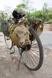 A sheep on a bike. Stock Photography