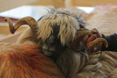 Sheep with big, curled horns Stock Image