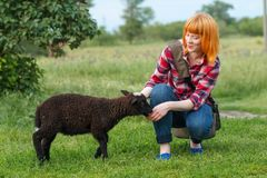 Sheep biting the finger of a cute red-haired girl.  royalty free stock photography