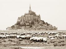 Sheep black & white Stock Image