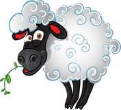 Sheep with blade of grass stock photos