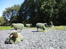 Sheep. Botanical garden of Montreal Canada. royalty free stock photos