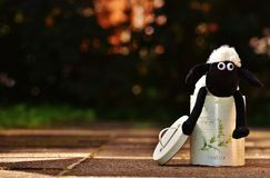 Sheep, Box, Funny, Animal, Soft Toy Stock Photos