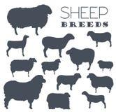 Sheep breed icon set. Farm animal. Flat design Royalty Free Stock Photos