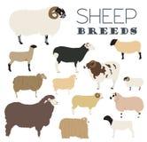 Sheep breed icon set. Farm animal. Flat design Stock Images