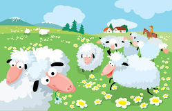Sheep breeding. In high mountains Stock Photo