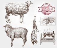 Sheep breeding Royalty Free Stock Images