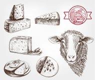 Sheep breeding Stock Images