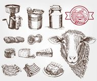 Sheep breeding. Set of sketches made by hand royalty free illustration