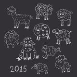 Sheep breeding. set of vector sketches Stock Photography