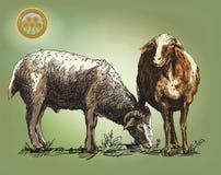 Sheep breeding sketch Royalty Free Stock Photos