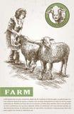 Sheep breeding sketch Stock Photography