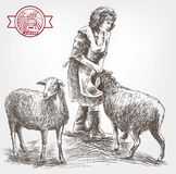 Sheep breeding sketch Stock Images